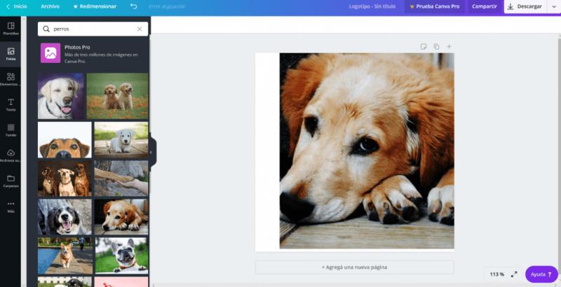 acceso banco imagenes canva